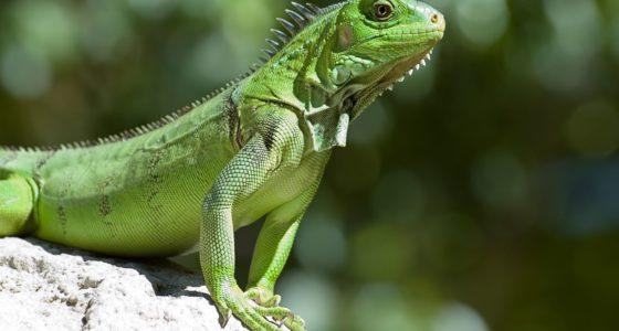 Zoo Parke Tropikal Curaçao